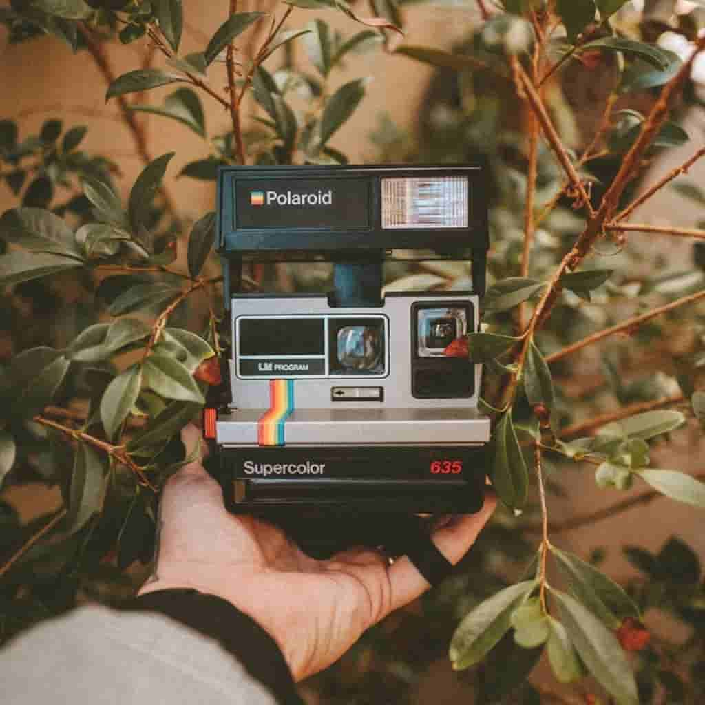 Close-up of a persons hand holding a Polaroid camera against a small tree.