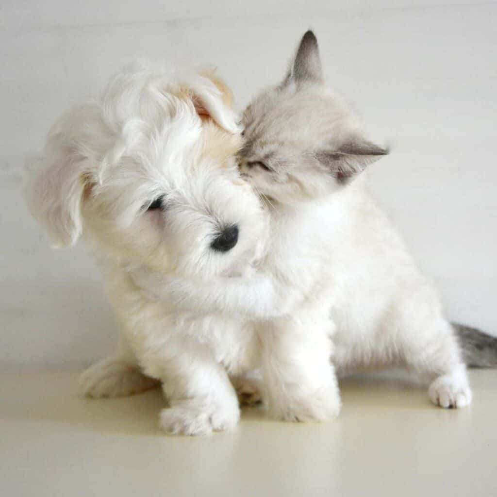 Cat hugging a dog.