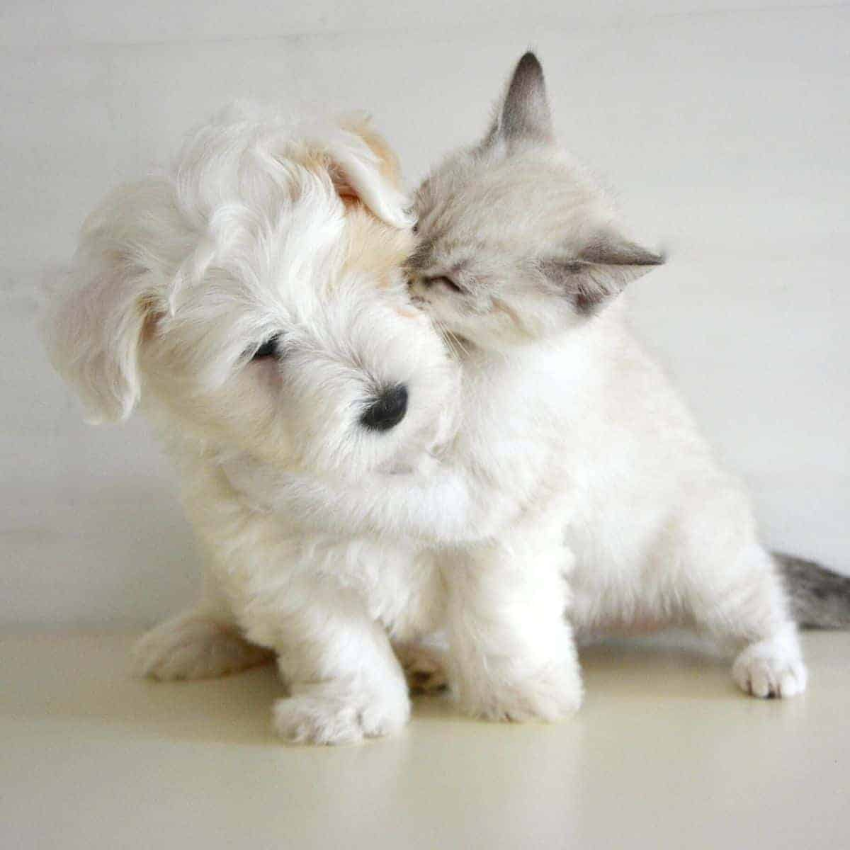 Cat hugging a dog.