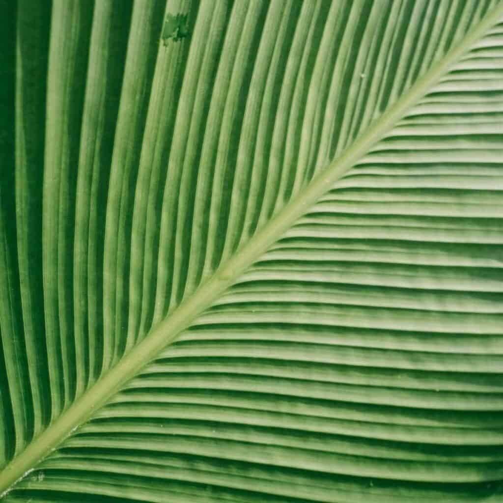 Close-up of a leaf showing its texture.